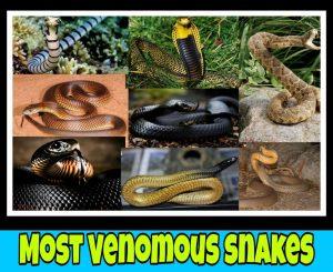 Top 10 venomous snake, snake image